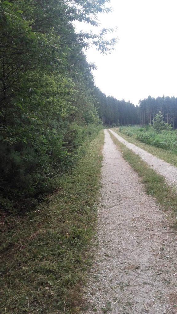 20160709_piste forestière cammazes gauche avant travaux
