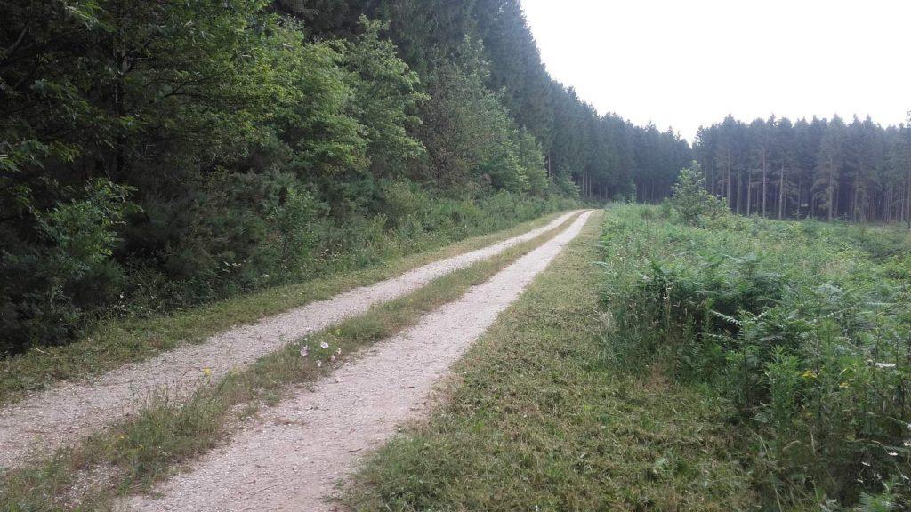 20160709_piste forestière des cammazes avant travaux
